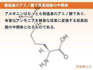 強塩基のアミノ酸で尿素回路の中間体