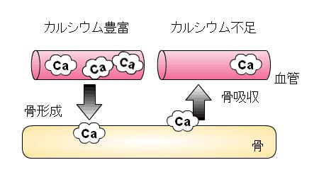カルシウムの沈着・溶出イメージ