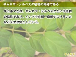 ギムネマ・シルベスタ植物の略称である