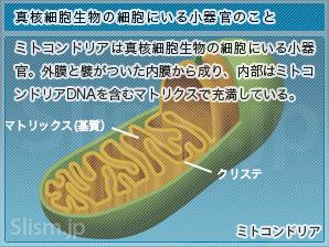 真核細胞生物の細胞にいる小器官のこと