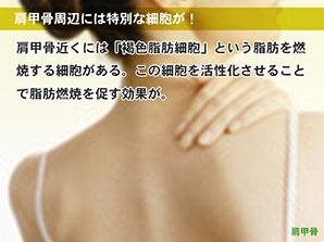 肩甲骨周辺には特別な細胞が!