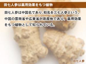 田七人参は薬用効果をもつ植物