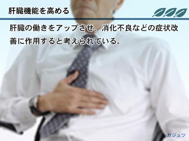 肝臓機能を高める