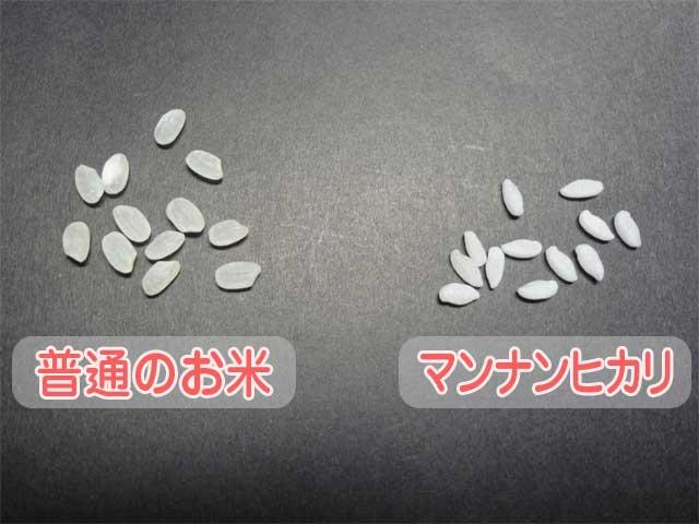 マンナンヒカリと普通のお米