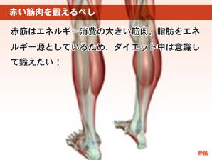 赤い筋肉を鍛えるべし