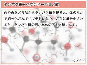 タンパク質→ペプチド→アミノ酸