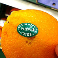 バレンシアオレンジ