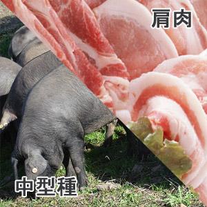 豚肩肉中型種