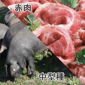 豚肩肉中型種赤肉