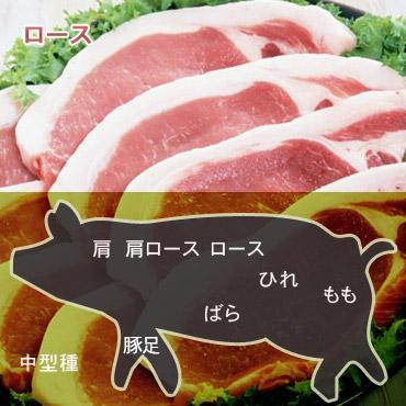 豚ロース中型種