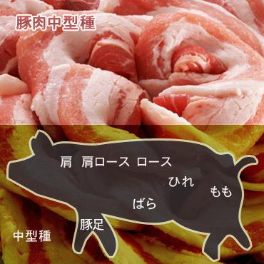 豚肉中型種