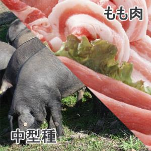 豚もも肉中型種