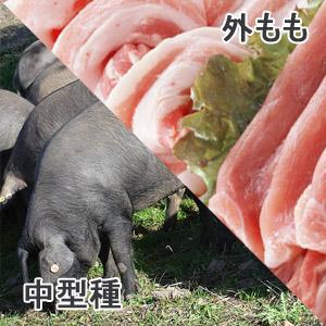 豚外もも中型種