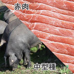豚外もも中型種赤肉