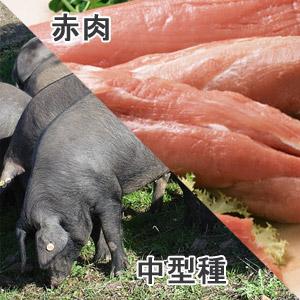 豚ヒレ中型種