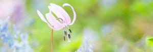 野バラに咲くピンクの花