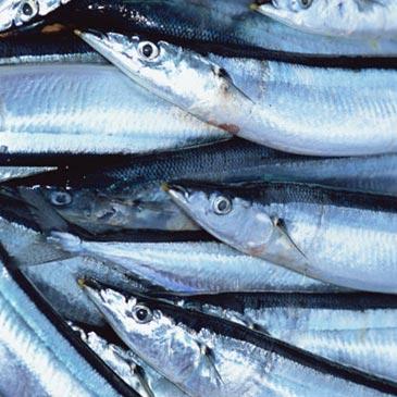 青魚イメージ