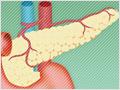 急性膵炎の発見にも役立つ、アミラーゼとは?