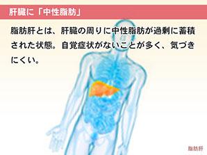 肝臓に「中性脂肪」