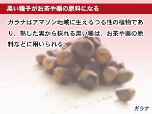 黒い種子がお茶や薬の原料になる