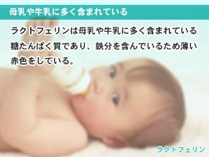 母乳や牛乳に多く含まれている