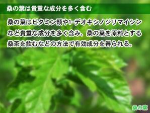 桑の葉は貴重な成分を多く含む