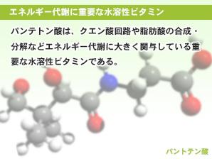 エネルギー代謝に重要な水溶性ビタミン
