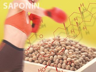 ダイエット効果やアンチメタボ効果が期待できるサポニン