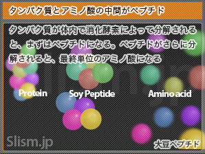 タンパク質とアミノ酸の中間がペプチド
