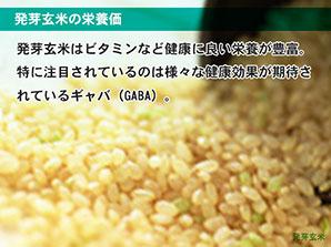 発芽玄米の栄養価