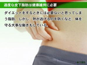 適度な皮下脂肪は健康維持に必要