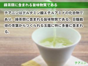 緑茶類に含まれる旨味物質である