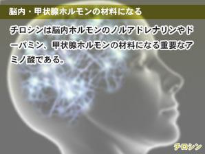 脳内・甲状腺ホルモンの材料になる