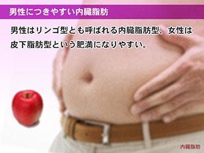 男性につきやすい内臓脂肪