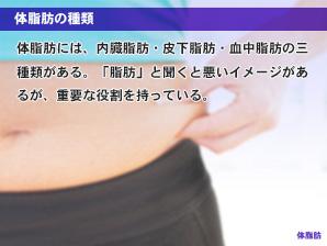 体脂肪の種類