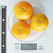 カロリー みかん みかんで太るのか解説!食べ過ぎに注意すればダイエット中も効果的?