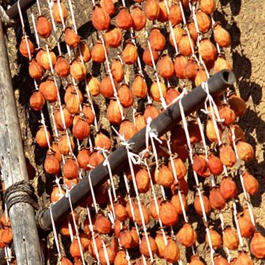 干し柿 栄養素
